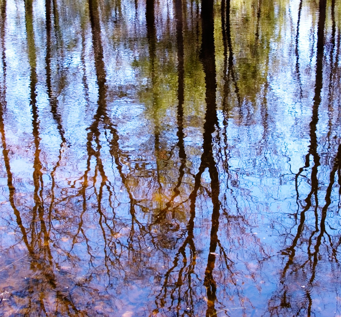 Bare trees and blue sky reflecting on the surface of still water, photo by Luminouslens
